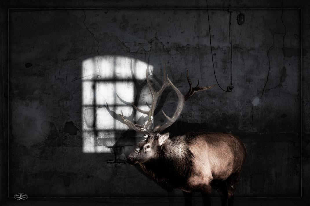 Hirsch mit Schatten
