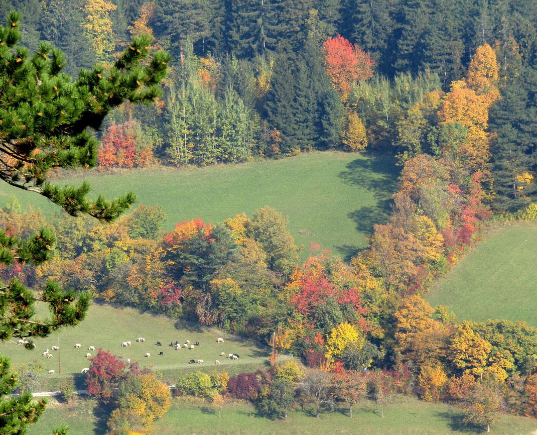 Schafsweide im Naturpark Sierningtal Flatzerwand, Bild: F.Kurz