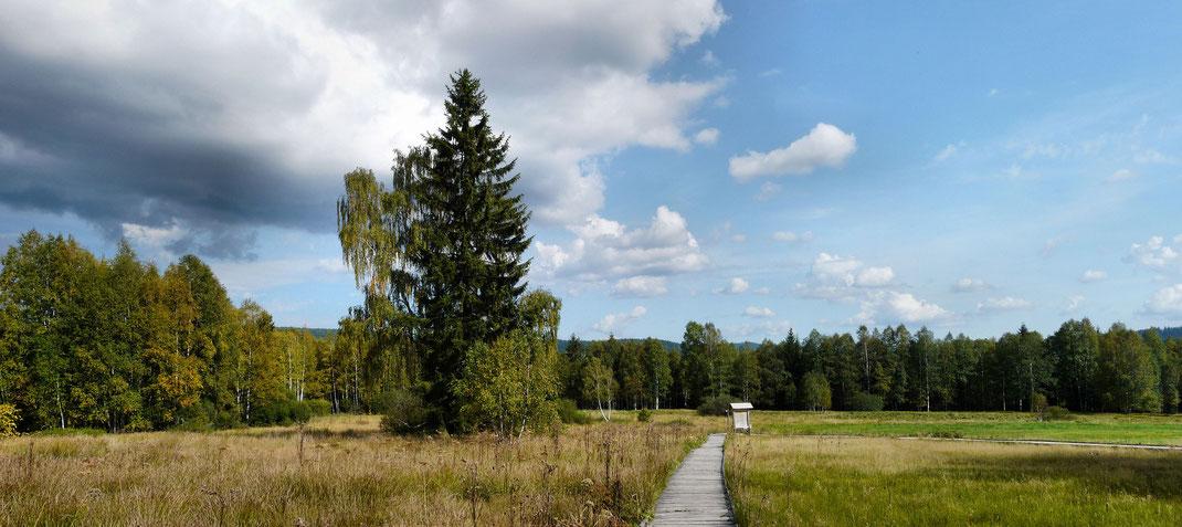 Europas größtes Waldschutzgebiet ist ein Segen für die Menschen und auch Natur beiderseits der Grenzen.