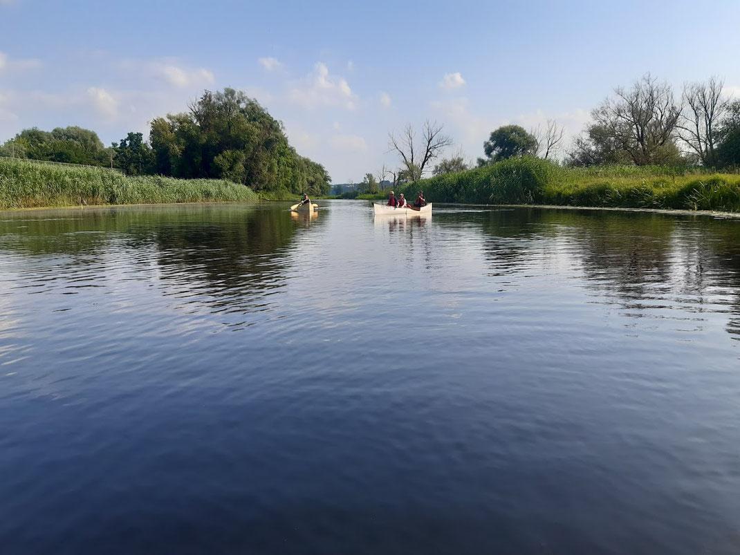 Auch nahe des Stadtzentrums Schwedt ist die Oder noch sehr naturnah geblieben.