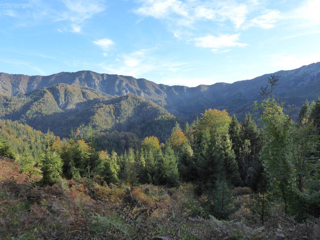 Blick auf einen Teil des Wildnisgebietes Dürrenstein