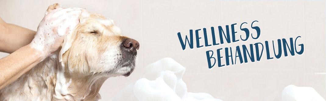 Hundestrand Hund waschen Hundeshampoo Hundeparfum Hundebalsam Hundebürste Hundebürsten Hundepflege