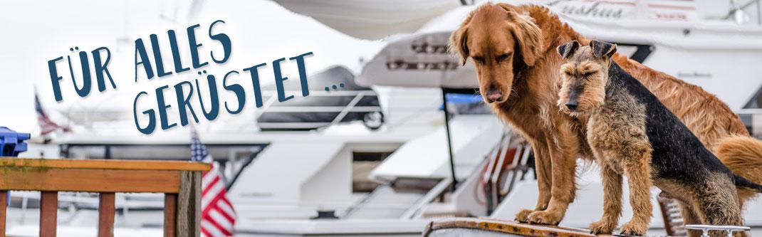 Hundestrand Hundekotbeutel Kotbeutelspender Leckerlibeutel Unterwegs sein mit Hund