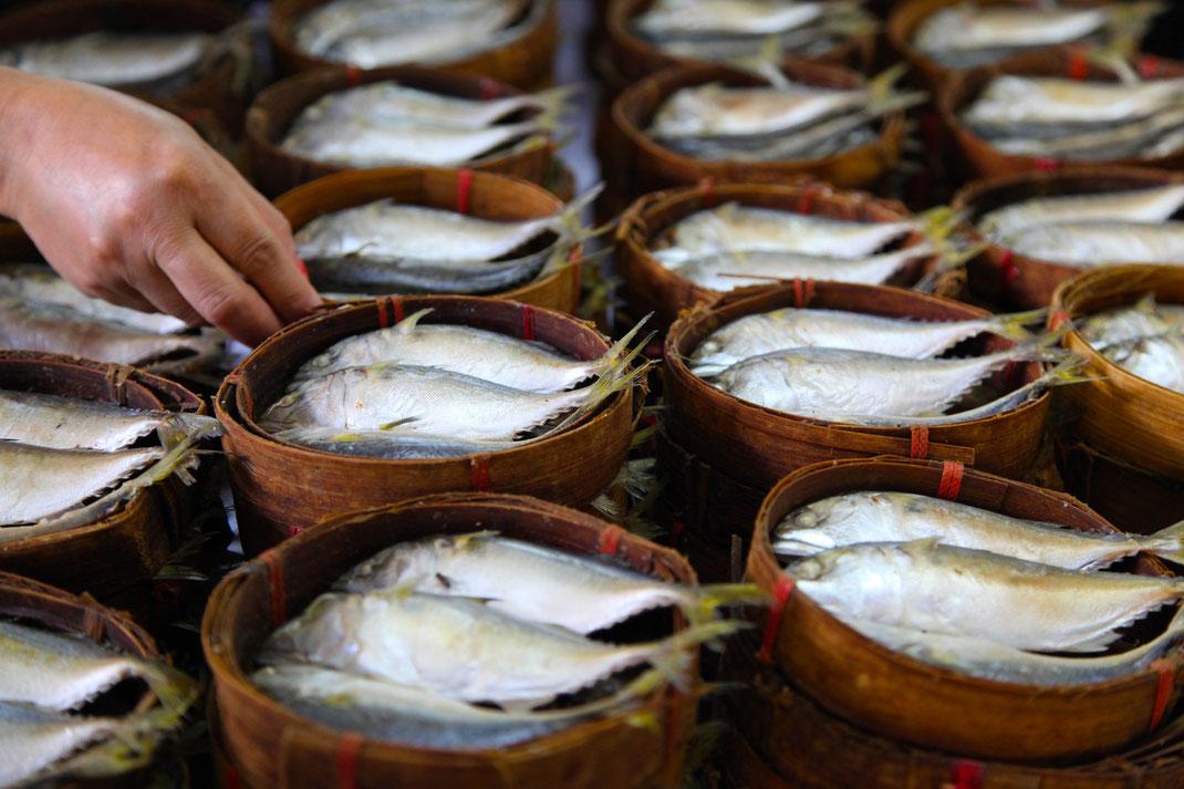 Market Fish | Chiang Mai