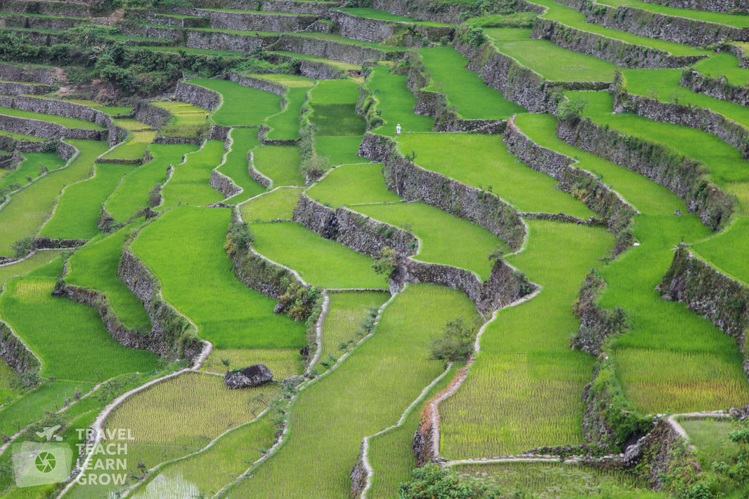 Rice Terraces | Batad