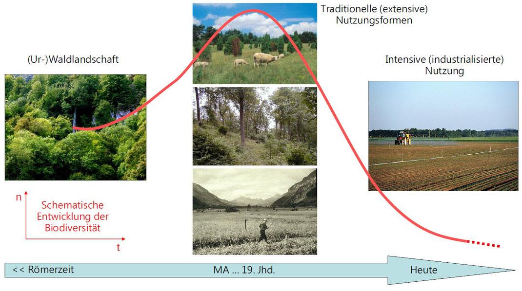 Entwicklung der Biodiversität in Mitteleuropa (Grafik: Andreas Segerer)