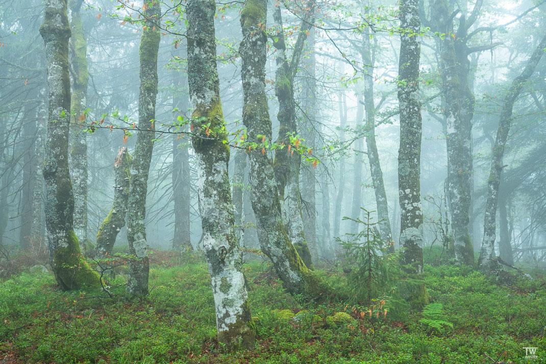 Sehr naturbelassen wirkten die Wälder (B2166)