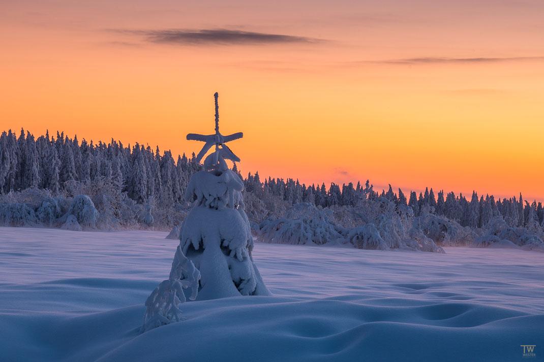 Im Sonnenuntergang (B2419)