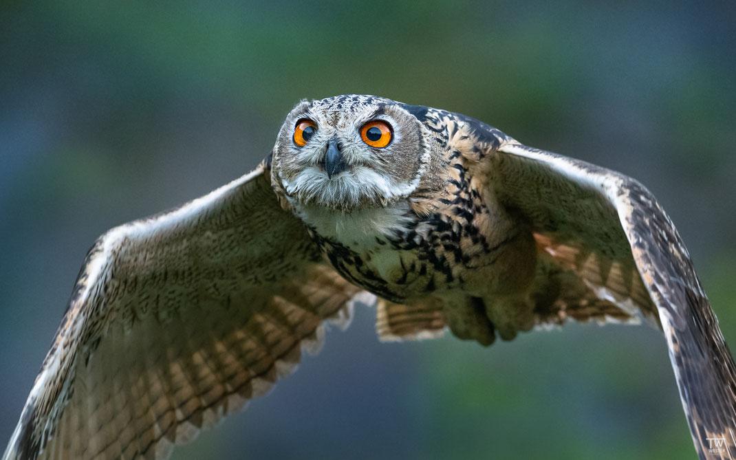 Und last but not least: Die Augen sind im Vorbeiflug maximal fokussiert, was toll anzusehen ist (B2645)