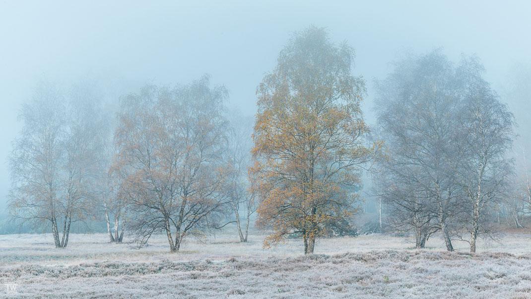 Es sah schön aus, wie der Nebel lediglich die Baumkronen erfasste (B2286)