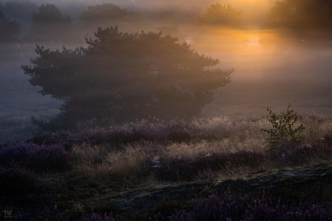 Spotlight am Morgen (B2743)