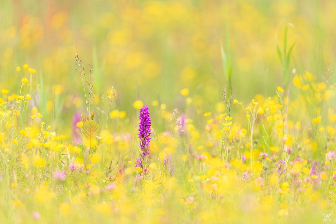 In der Orchideenwiese (B2608)