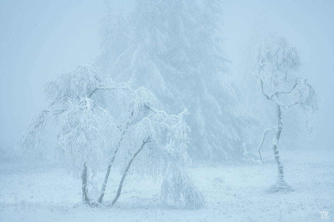 Einige Bäume erinnerten mich regelrecht an Gestalten (B2370)