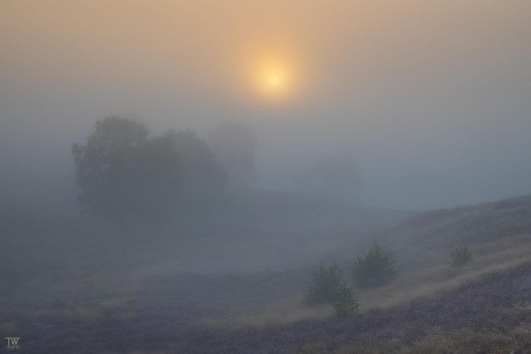 Langsam drang die Sonne durch die Nebeldecke… (B2729)