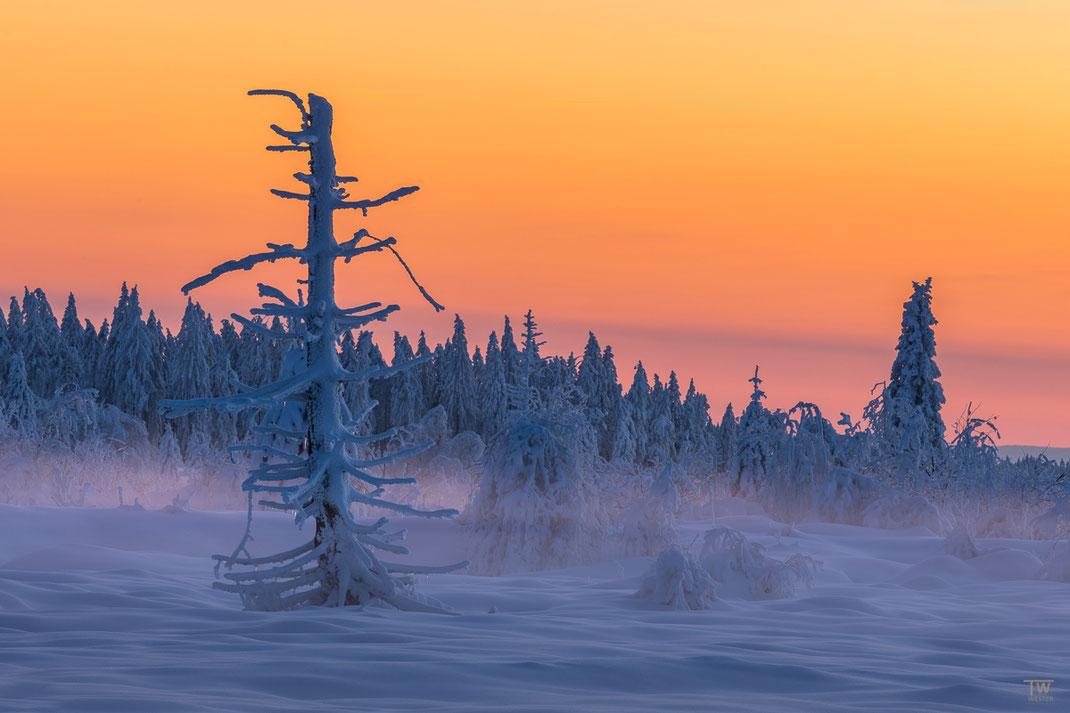 Nach dem letzten Bild ging es schnellen Schrittes auf die andere Seite des Waldes, auf der sich nach Sonnenuntergang noch tolle Farben zeigten, vor dem Hintergrund eines wolkenlosen Himmels. (B2421)