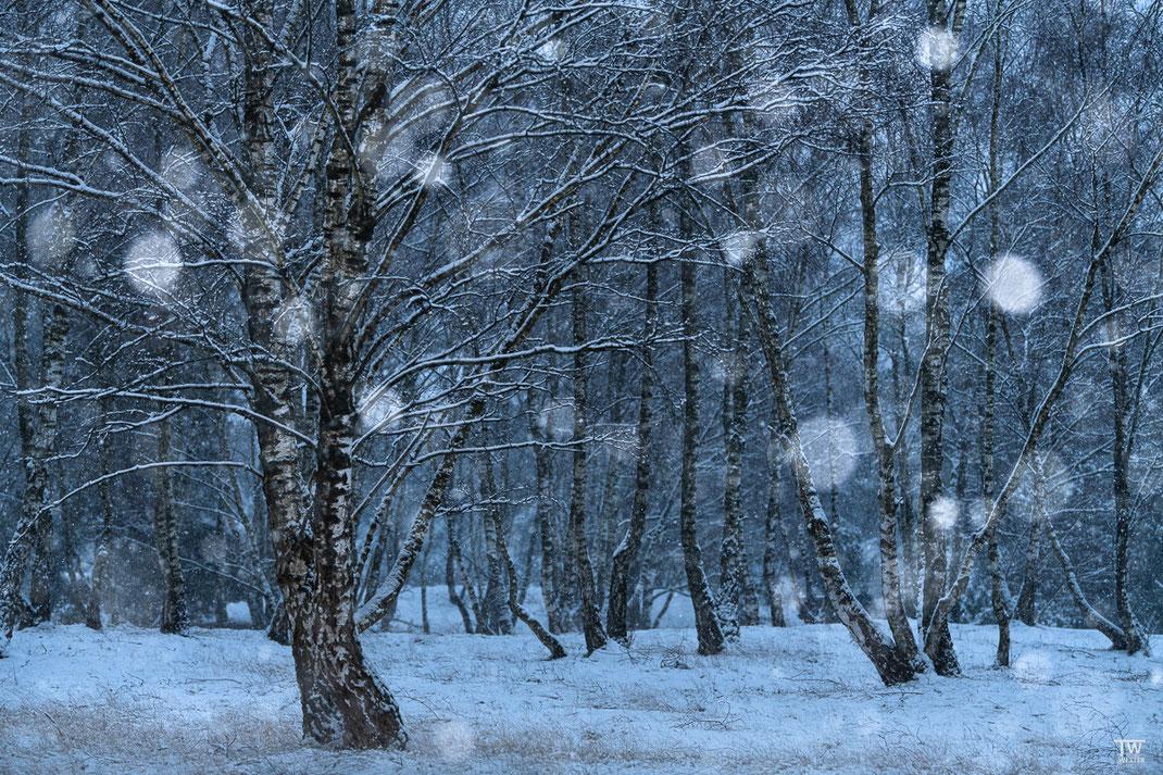 Schneefall im Birkenwald (mit Blitz) (B2338)