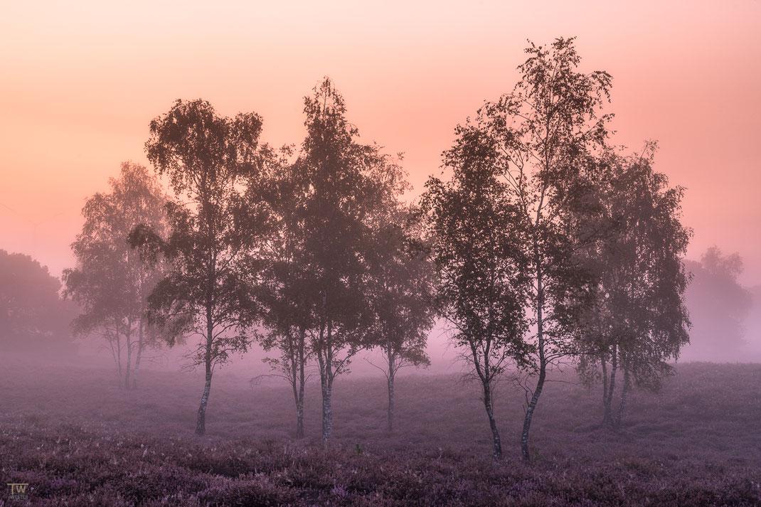 Vor Sonnenaufgang hatte ich nur einmal diese stärkeren pastelligen rot-Töne (B2183)
