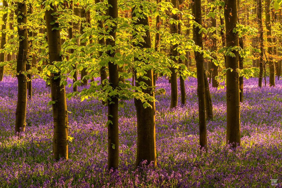 Doch am allerbesten gefällt mir diese kurze Phase, wenn direkte Sonne auf den Waldboden und die Blätter trifft und diese Lichtspots entstehen! (B1987)