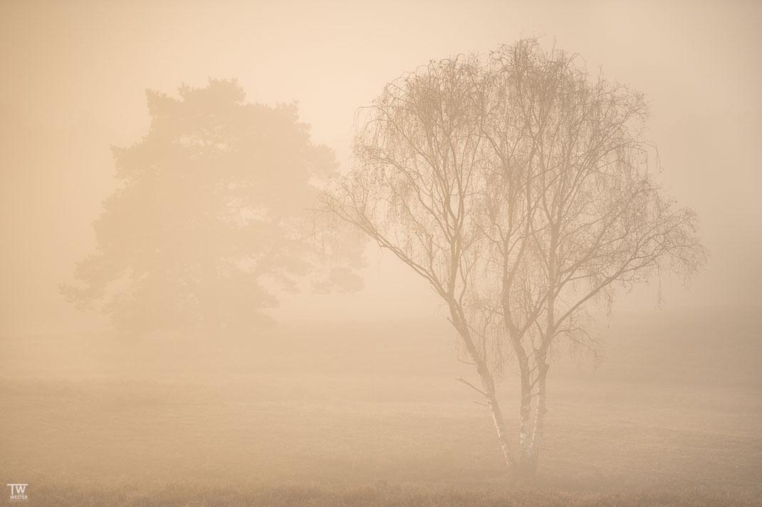 Aber auch nachdem die Sonne durch den Nebel stieß, faszinierten mich die Bedingungen  (B2311)