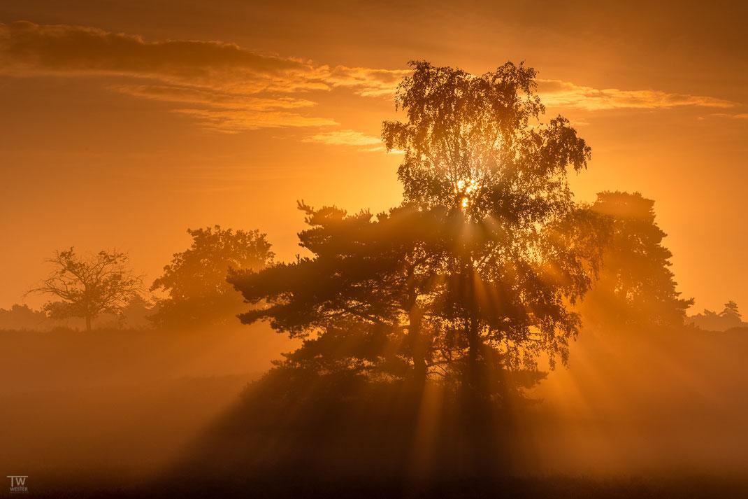 Der Sonnenbaum (B2169)