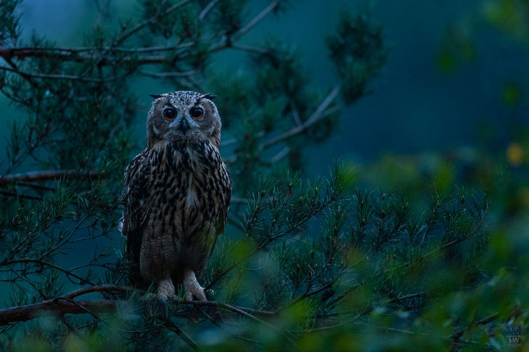 In den Tiefen der blauen Stunde…eines meiner persönlichen Lieblingsbilder (B2702)