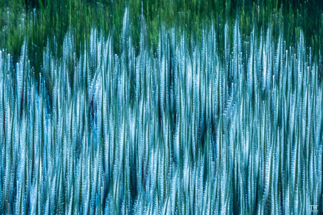 Nature as Art (B2625)