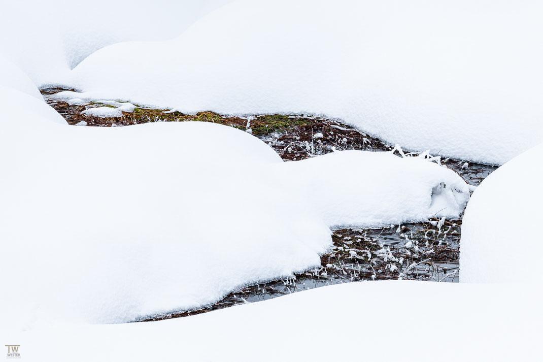 Abstraktes aus dem Hochmoor (B2382)