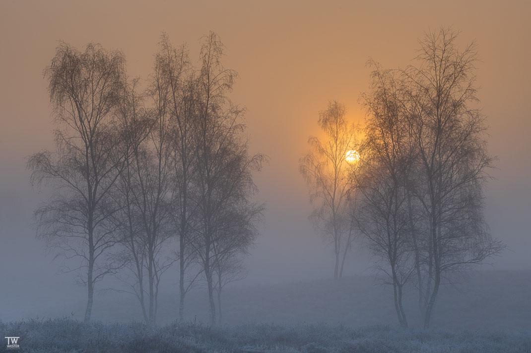 Morgenstimmung (B2297)