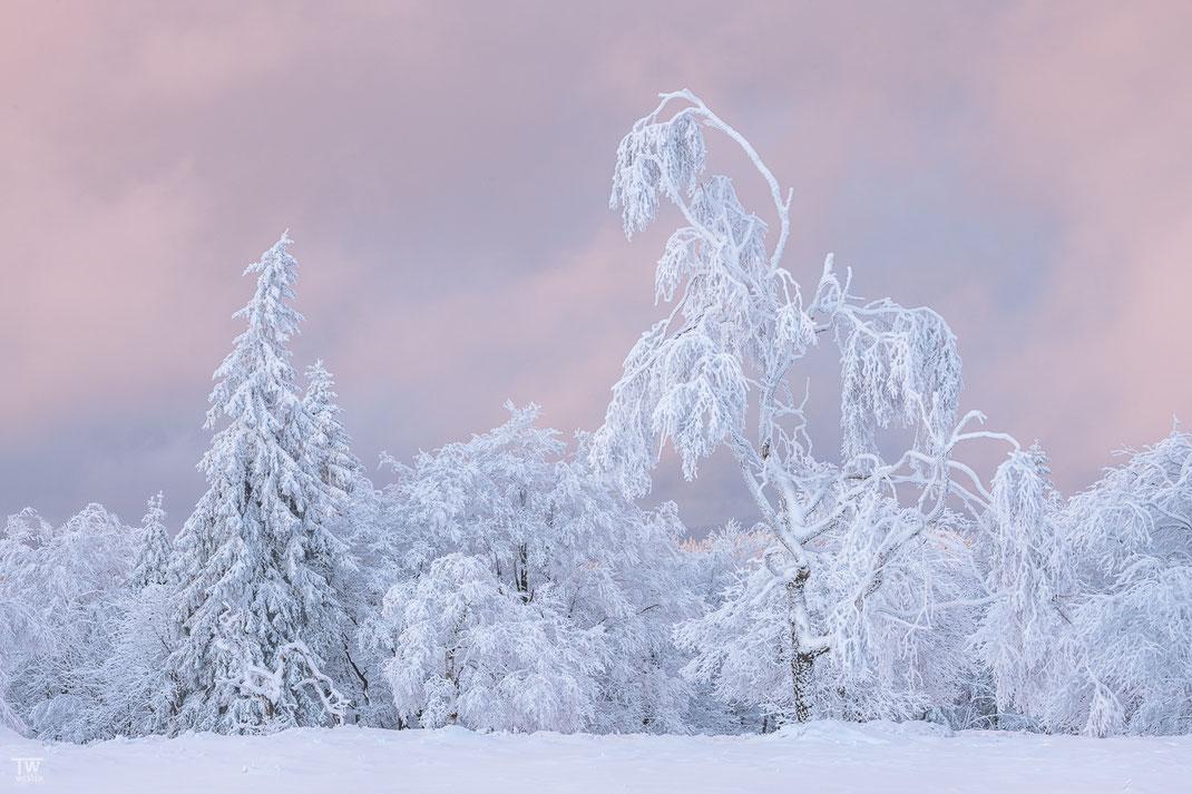 …und wiederum später auch in schönen Magenta-Tönen. Übrigens hatte ich selten eine weißere Landschaft erlebt wie an diesem Tag, es war der 1.1., der Neujahrstag. Viele Bilder aus dieser Serie sind an diesem Tag entstanden (B2508)