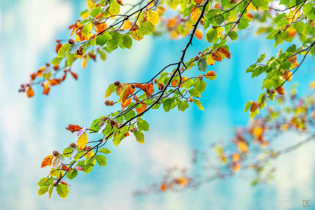 Eine Highkey-Aufnahme der ersten Herbstfarben (B2213)