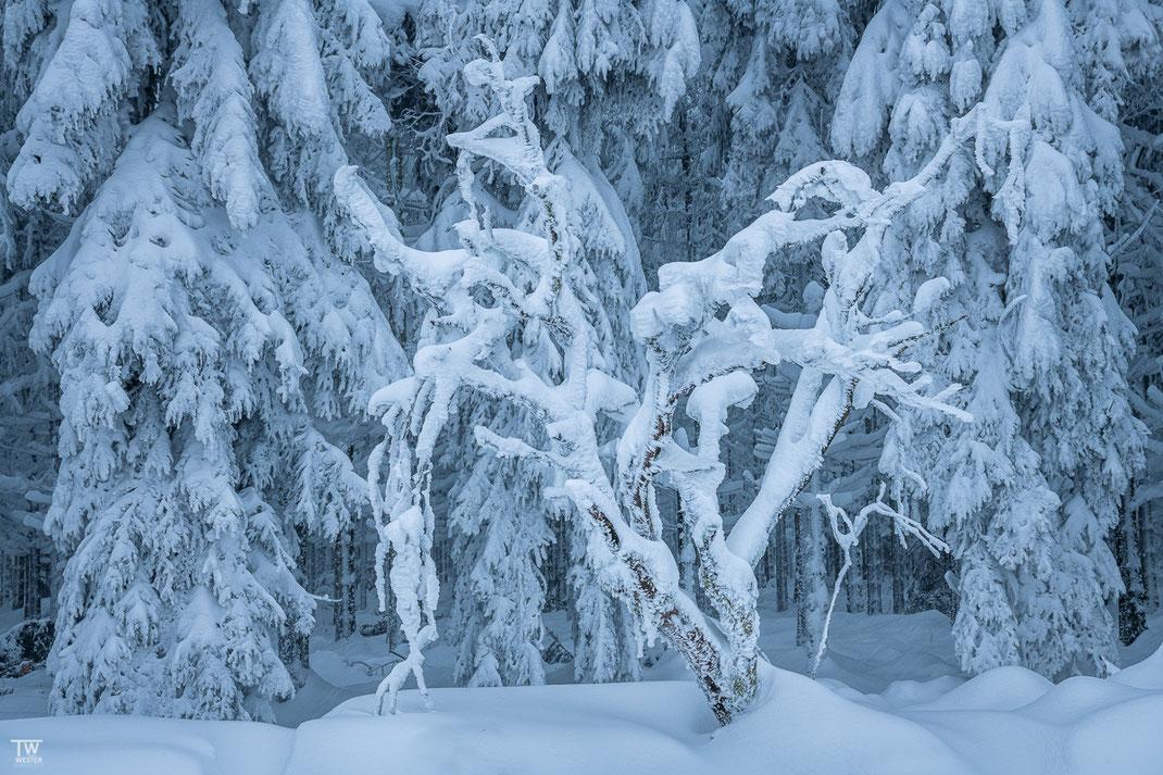 Baumskulpturen am Waldrand (B2340)