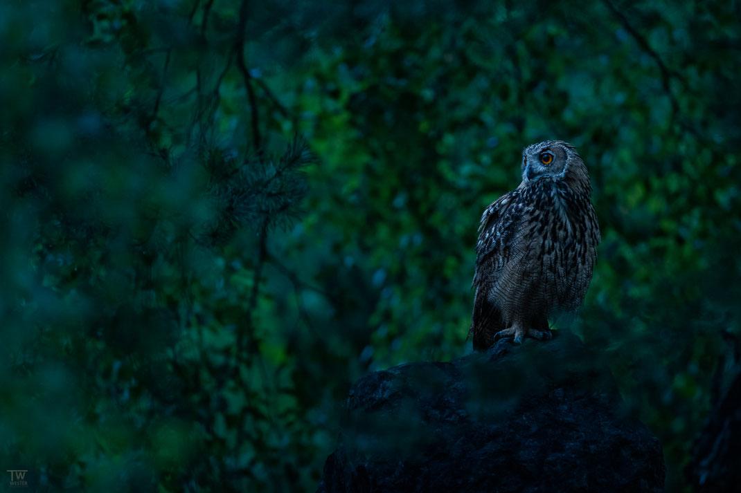 Im dunklen Wald (B2716)
