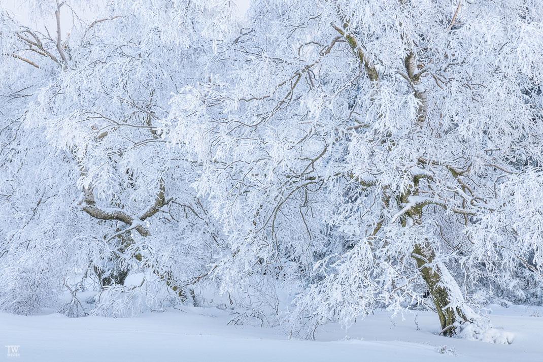 Verwachsen im Schnee (B2380)