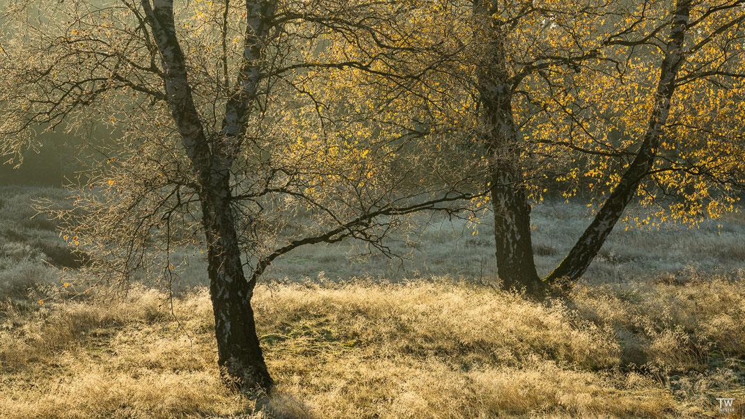 Das zarte Silbergras sieht auch im Dezember noch sehr fotogen aus, gerade im Gegenlicht… (B2307)