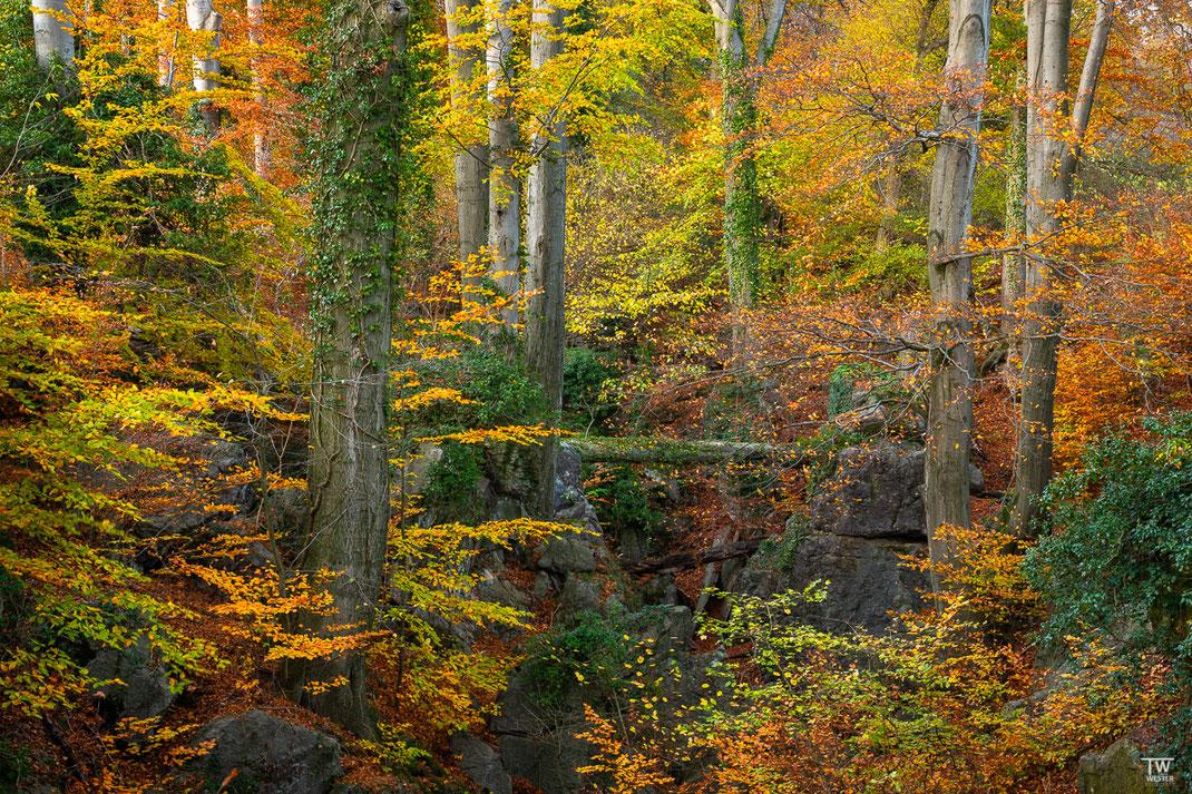 Höhepunkt des Herbstes (B2260)