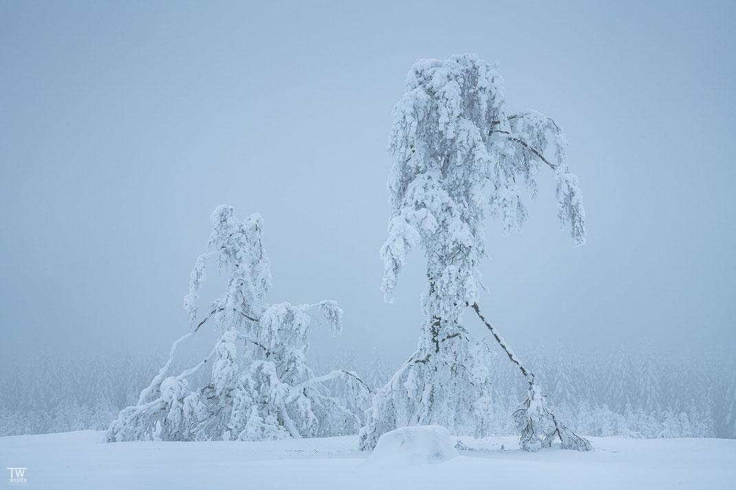 Snow walker (B2448)