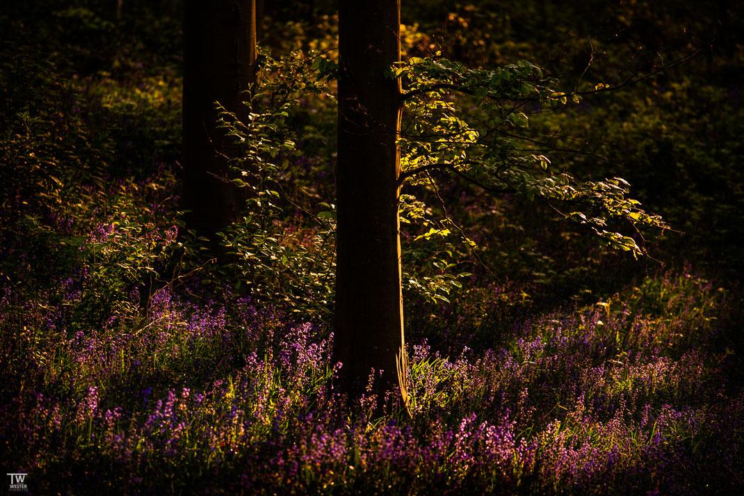 Spotlight  (B1980)