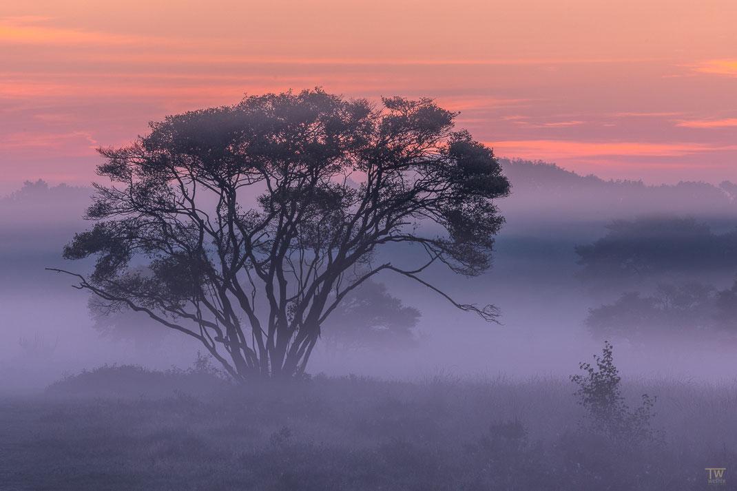 Und hier mein persönlicher Favorit, in 2 Varianten: kurz vor Sonnenaufgang… (B2239)