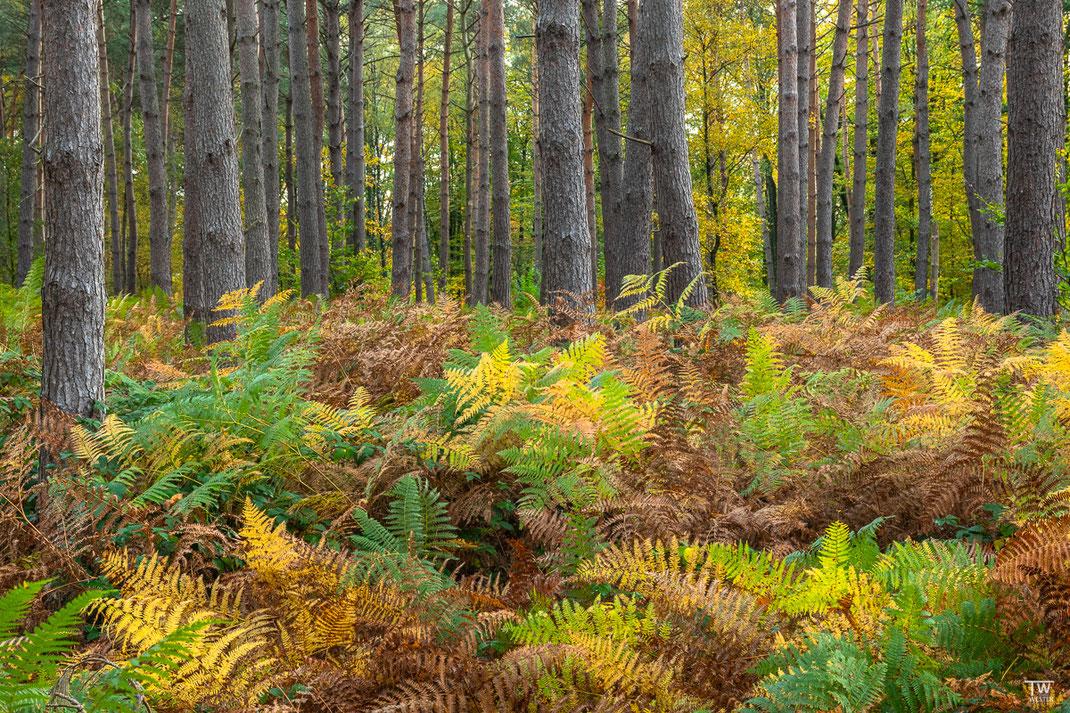 Los geht es erstmal mit Impressionen aus dem Farnenwald: zu Beginn zeigte sich noch die volle Farbpalette (B2274)