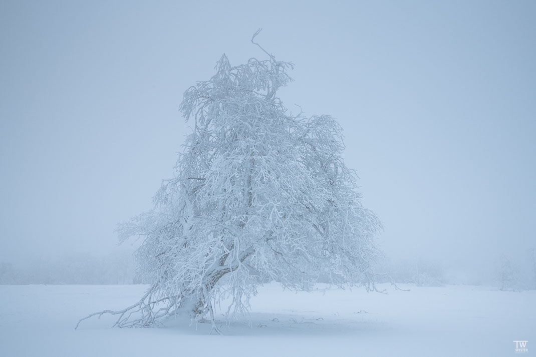 Mit dem Winde geneigt (B2360)