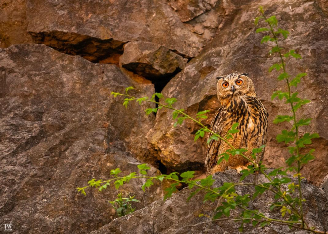 Stets beobachteten sie aufmerksam die Gegend, auch hier, im besten Abendlicht (B2667)