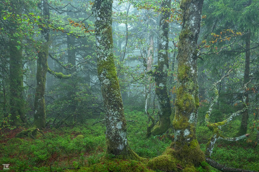 Ein Stück Urwald (B2163)