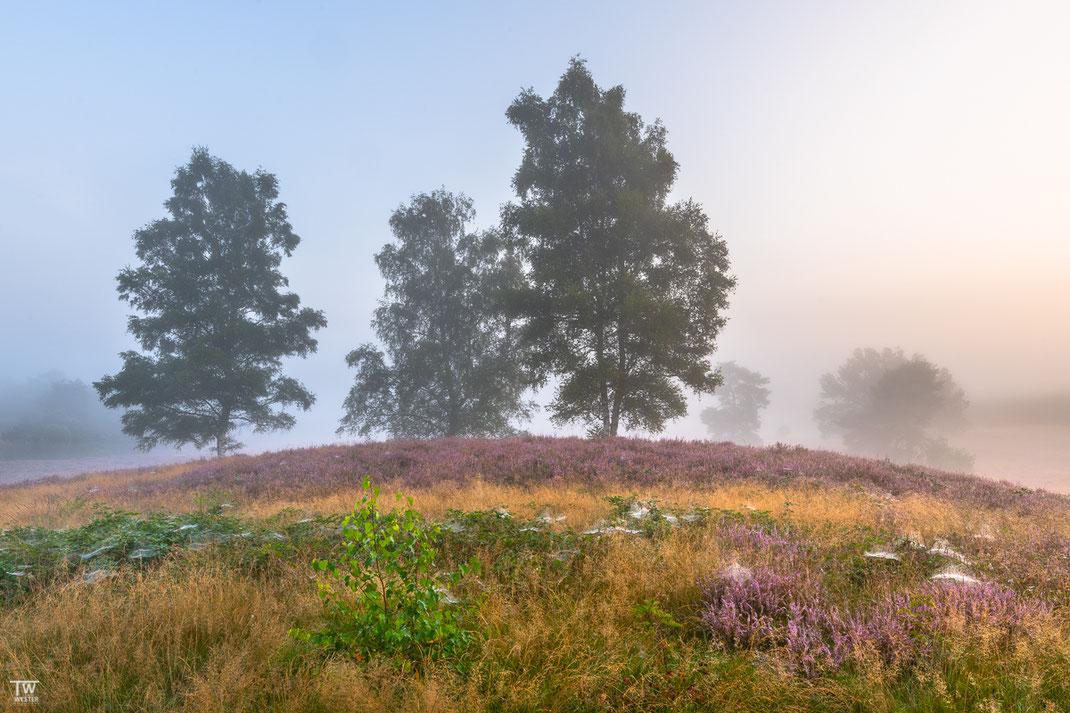 Früh morgens beleuchtet an dieser Stelle bereits das warme Licht von rechts die Heidelandschaft (B2750)