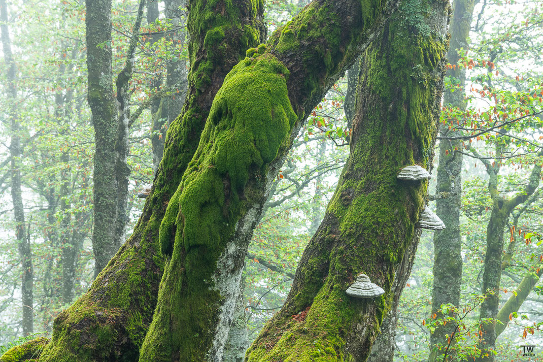Auch Baumpilze sah man an vielen Stellen (B2152)