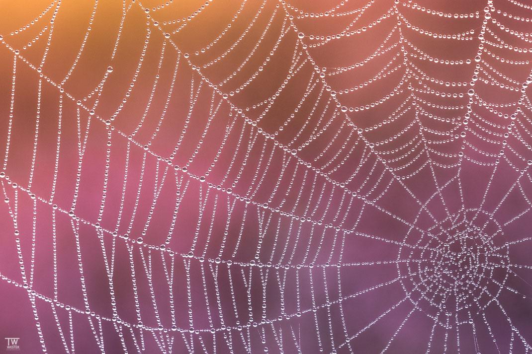 Spiders Work (B2194)