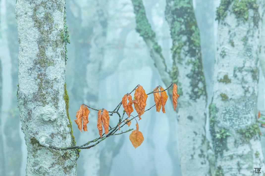 Erste Herbstboten (B2150)