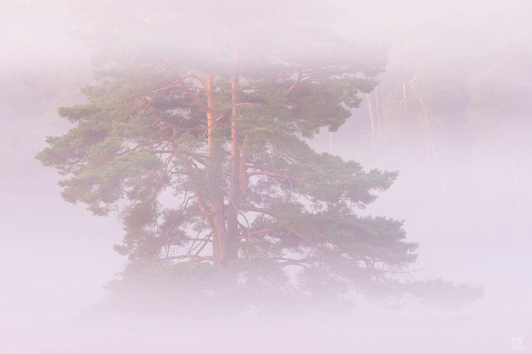 Verschiedene Nebelschichten führen manchmal zu tollen Effekten (B2188)