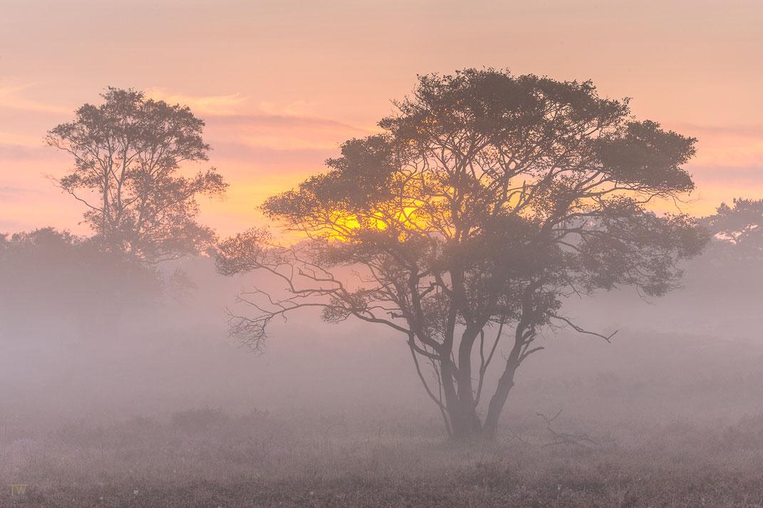 Nebel und Sonne; die perfekte Mischung, um jeden Fotografen glücklich zu machen 😉 (B2252)