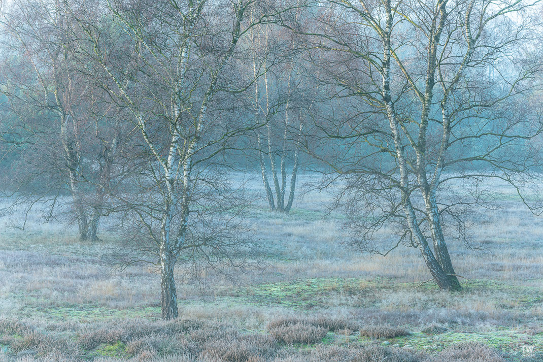 Gerade gefroren zeigt die Heide tolle Farbkontraste (B2304)