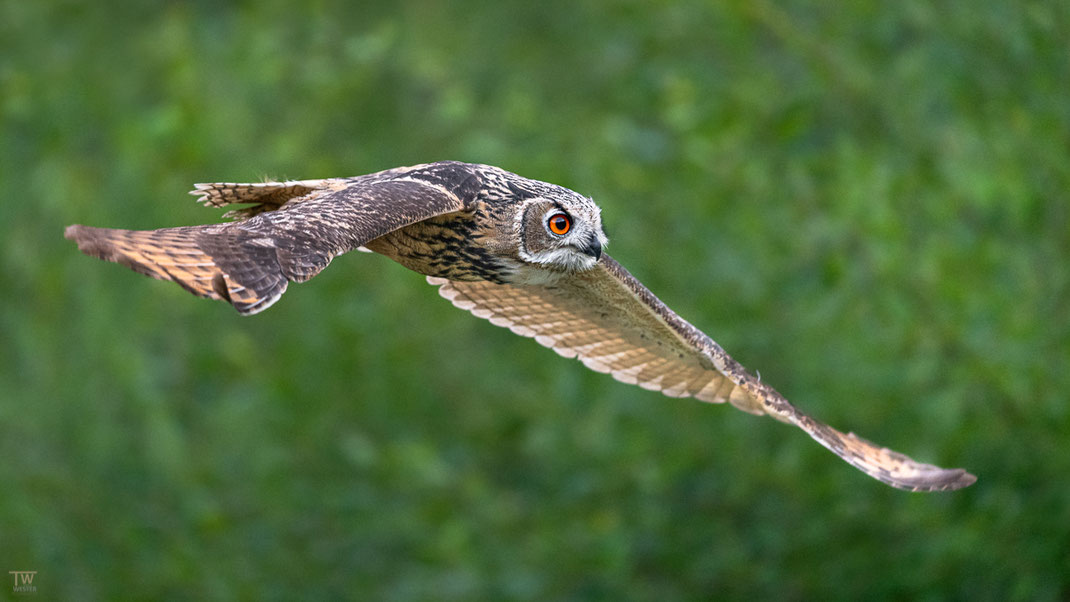 Auf Augenhöhe flogen sie nur selten (B2689)
